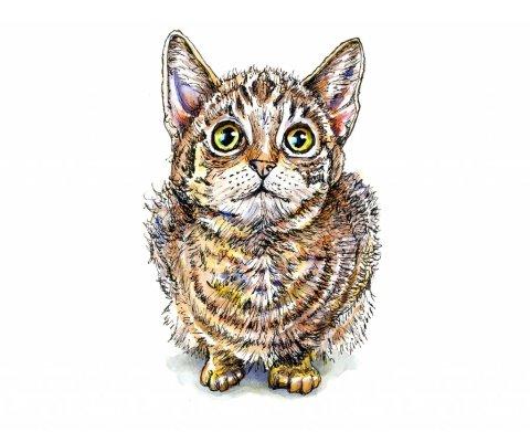 Kitten Eyes Watercolor Illustration