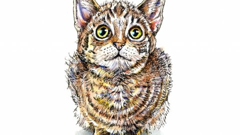 Kitten Eyes Watercolor Illustration