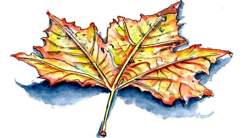 Autumn Fall Leaf Watercolor Illustration