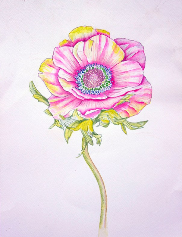 Pink Flower Watercolor painting by Atique Ahmed