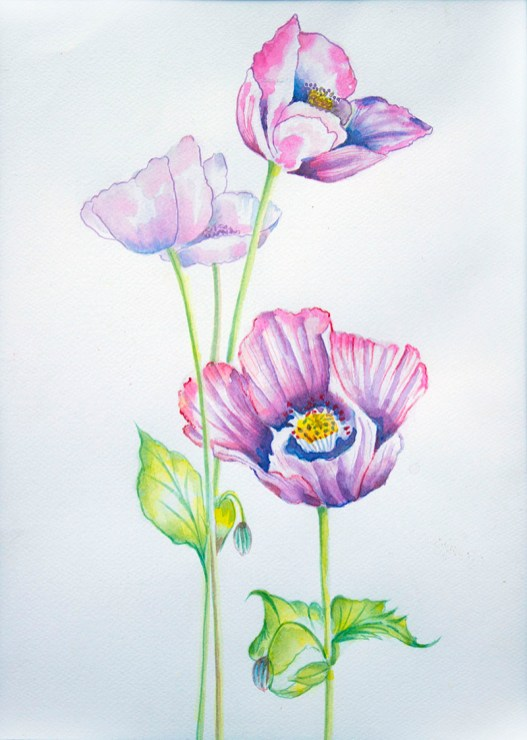 Pink Purple Flowers Watercolour by Atique Ahmed