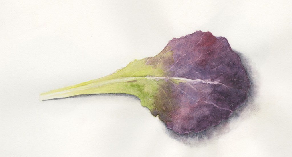 lettuce leaf watercolor painting