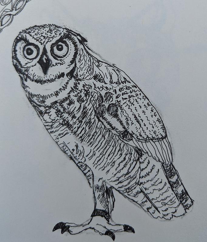 doodlewash November 2018 Day 8 Owl sb71p28sb71p28a