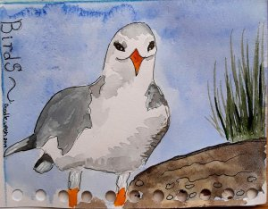 """December 8th prompt of """"birds"""" taught me seagulls really are fun to paint. 🌝 463D0337-0B"""