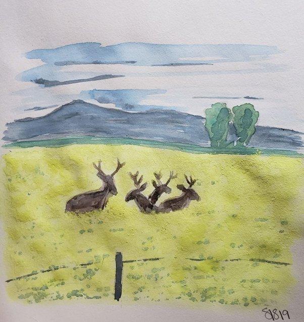 Deer Field Watercolor by Shanyn Silinski