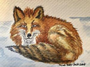 Brown artic fox IMG_0551