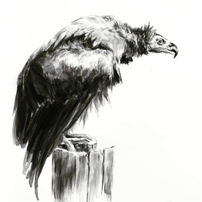 Vulture Black and White Painting