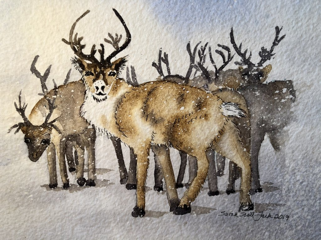 Reindeer in the cold reaches of Finland. reindeer-group watercolor