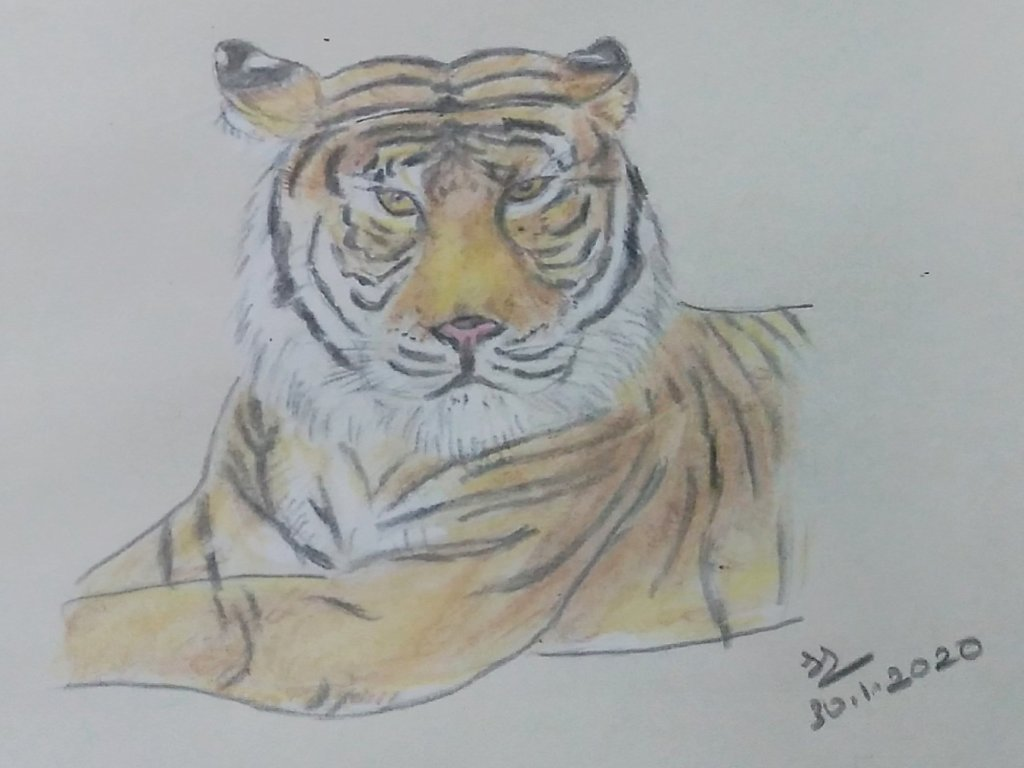 January Art Challenge : Day 30 – Tiger #doodlewashJanuary2020 1580403033371-f5223581-3d10-4204
