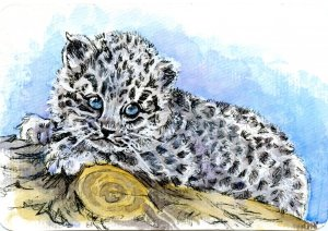 Amur Leopard Cub-The Amur Leopard is believed to be the rarest feline on earth #PostcardsForTheLunch