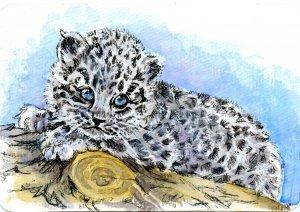 Amur Leopard Cub-The Amur Leopard is believed to be the rarest feline on earth #PostcardsForTheLunch