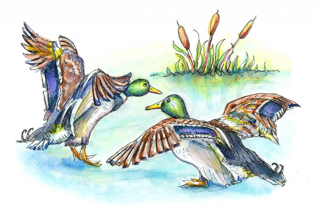 Mallard Ducks Pond Cattails Watercolor Painting