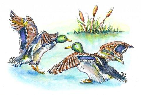 Mallard Ducks Pond Cattails Watercolor Painting