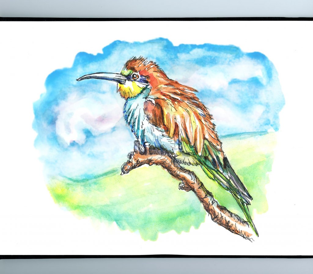 Bee-Eater Sky Clouds Watercolor Painting Sketchbook Detail