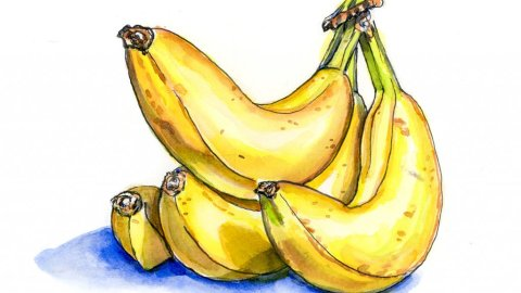 Bananas Bunch Watercolor Illustration