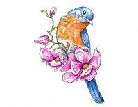 Bluebird Magnolia Flowers Watercolor Illustration