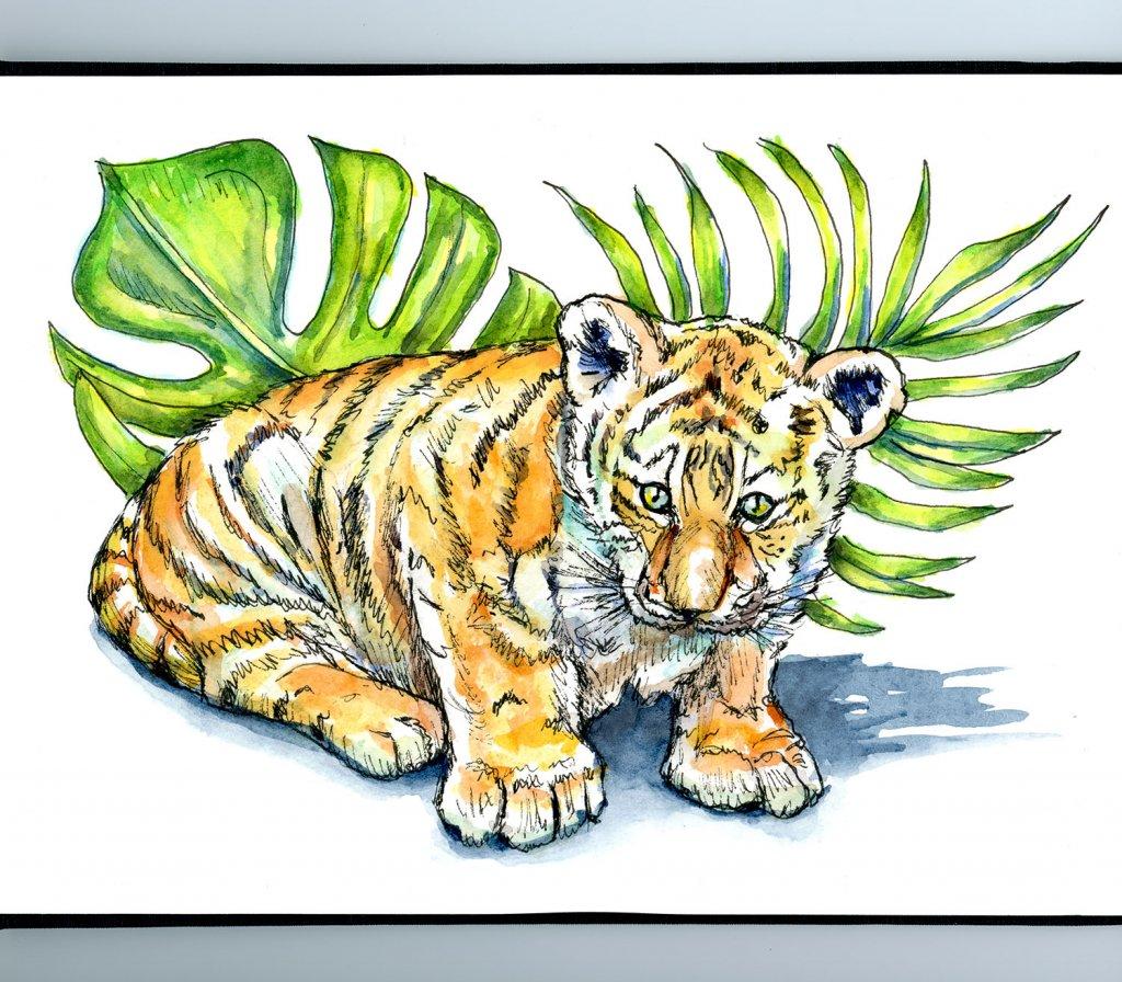 Tiger Cub Baby Watercolor Illustration Sketchbook Detail