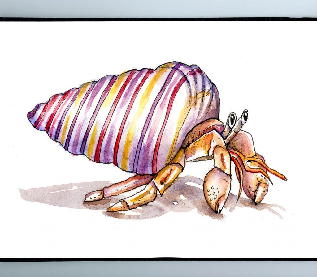 Hermit Crab Rainbow Seashell Watercolor Illustration Sketchbook Detail