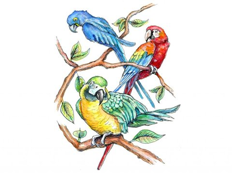 Macaws Three Yello Gold Scartlet Blue Watercolor Painting