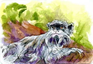 Emperor Tamarin Monkey-Did you know this monkey got its name for a resemblence to the German Emperor