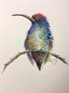 Hummingbird Hummingbird1_s