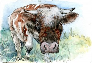 No Bull-Did you know that cows can see almost 360 degrees and can scent things from up to six miles