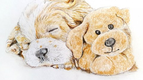Puppy & Plush Toy Watercolor Pencil Painting by Judy Jones
