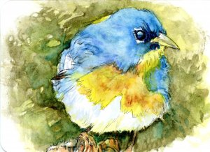 The Bluebird Illusion- Did you know there is no such thing as a blue bird? They are actually gray, b