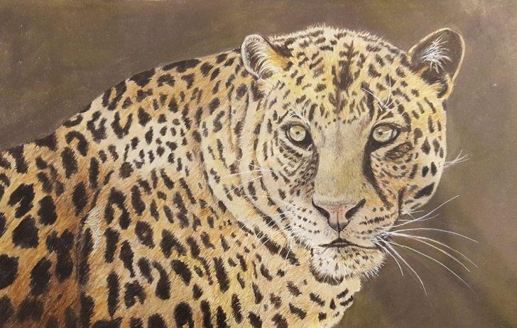 Leopard Watercolor Pencil