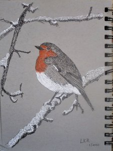 Robin in the snow. Ink only, no watercolor. robin ink only