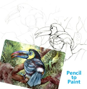 Did you know that Toucan Sam, the lively toucan on Froot Loops cereal is a Keel-billed Toucan? #Penc