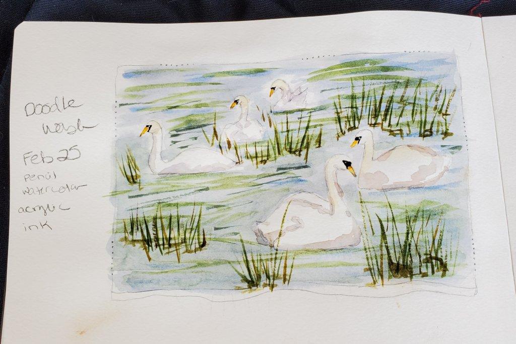#Doodlewash #Doodlewashed #WorldWatercolorGroup Feb 25 – swans 2020-02.25-swans