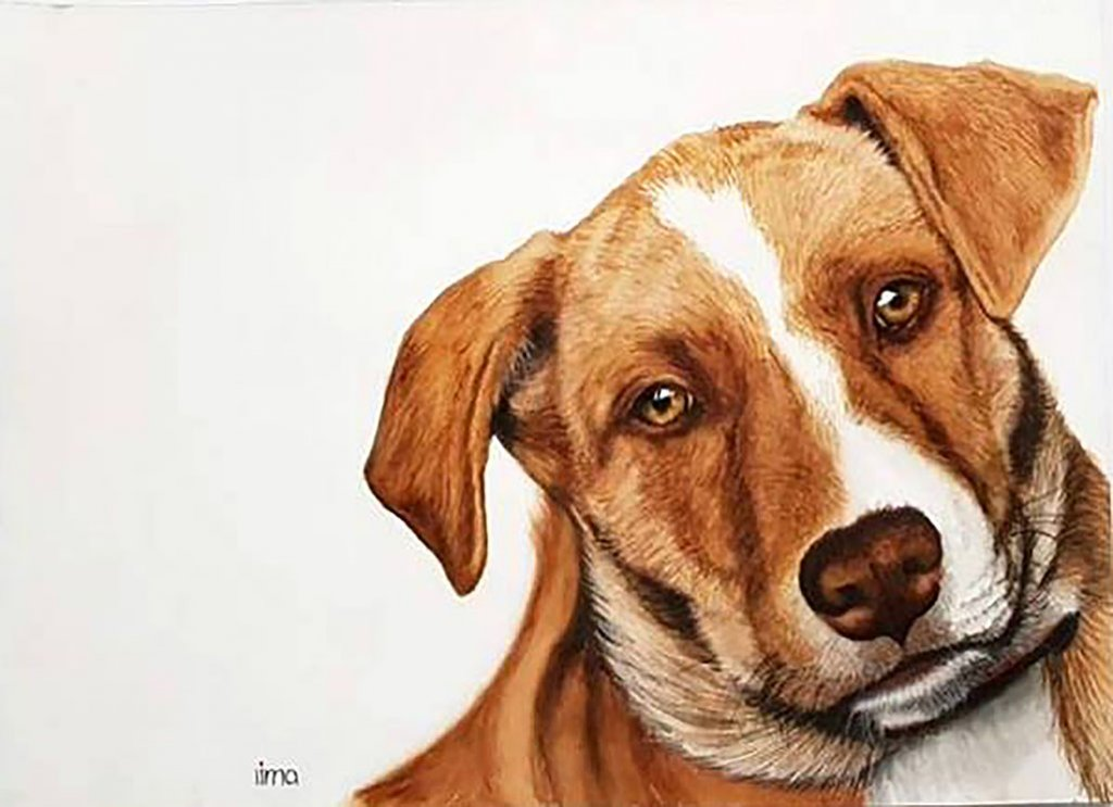 Cute Dog Pet Portrait