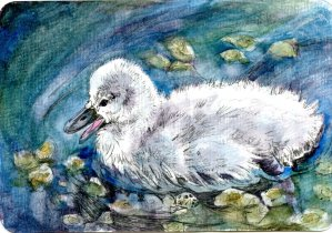 Cygnet – #PostcardsForTheLunchBag Did you know that the fear of swans is called Cygnophobia or