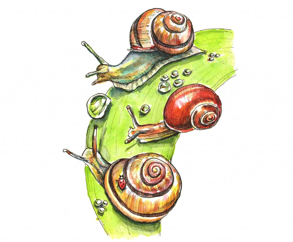Snails Raindrops On Leaves Watercolor Painting