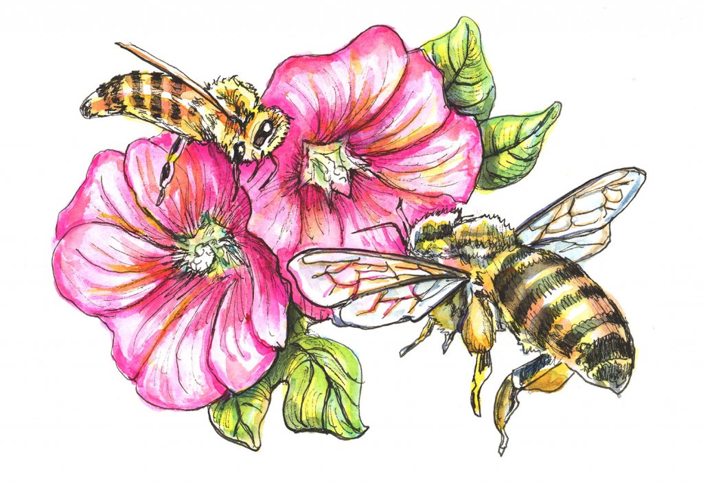 Bees And Hollyhocks Flowers Watercolor Painting