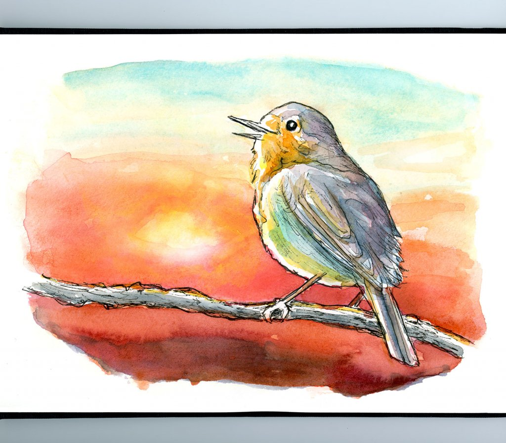 English Robin Bird On Brand Sunset Watercolor Painting Sketchbook Detail