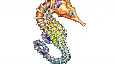 Seahorse Colorful Watercolor Painting