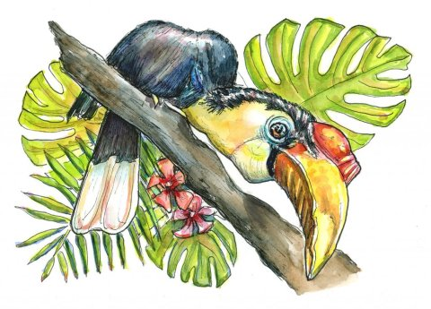 Wrinkled Hornbill Endangered Tropical Bird Watercolor Painting