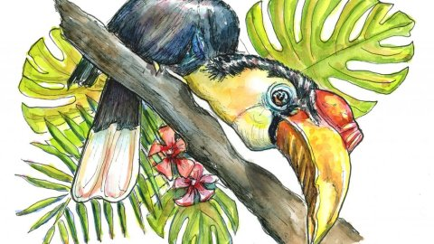 Wrinkled Hornbill Endangered Tropical Bird Watercolor Painting