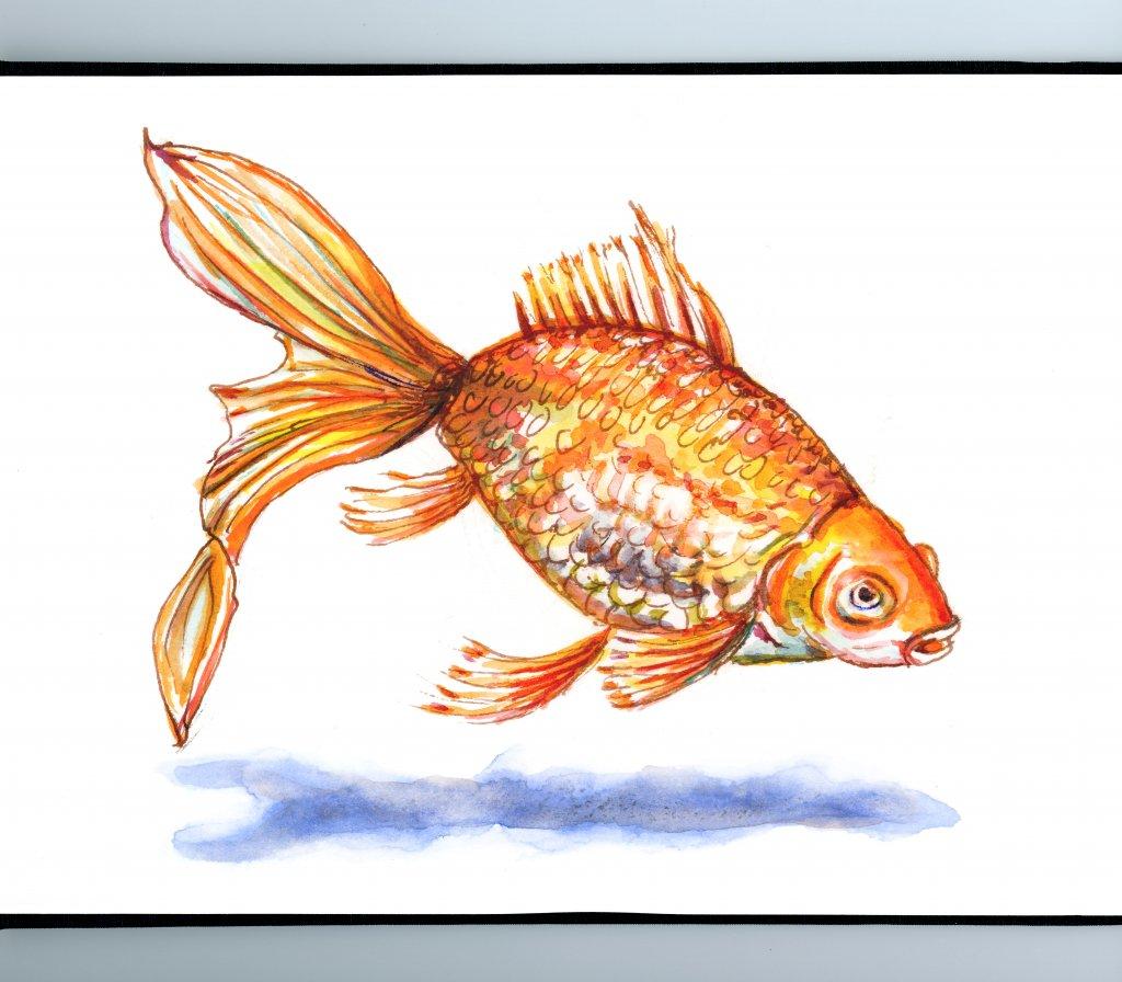 Goldfish Watercolor Sketch Sketchbook Detail