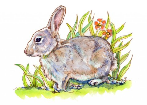 Bunny Rabbit In Grass Flowers Watercolor Painting