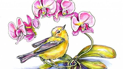 Orchids And Warbler Bird Watercolor Illustration