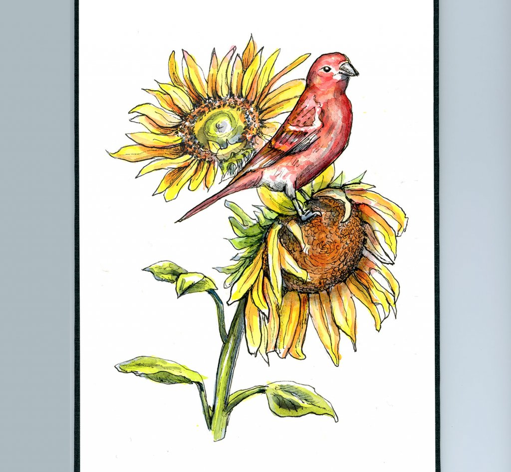 Sunflowers and Red Finch Watercolor Illustration Sketchbook Detail