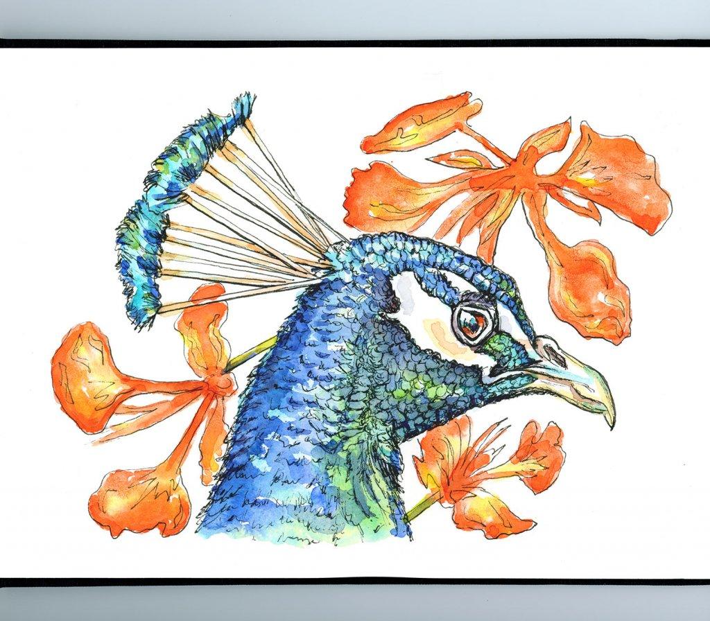 eacock Head And Peacock Flowers Watercolor Illustration Sketchbook Detail