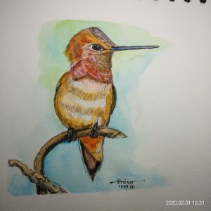 #doodlewashFebruary2020 #WorldWatercolorGroup #Beginner #Day1 #Hummingbird #1Feb2020 IMG_20200201_12
