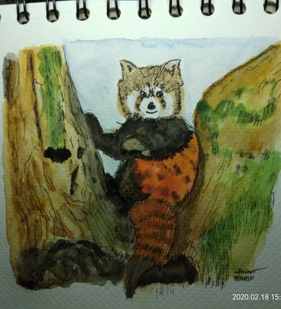 #doodlewashFebruary2020 #WorldWatercolorGroup #Beginner #16 #red panda #18Feb2020 IMG_20200218_15273