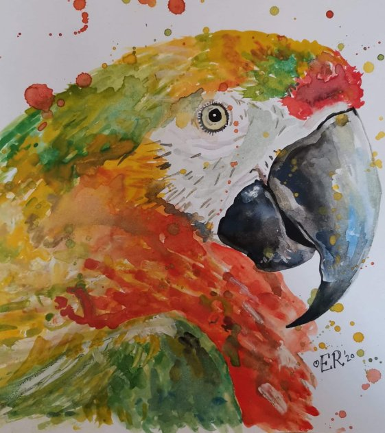 Parrot Macaw Watercolor