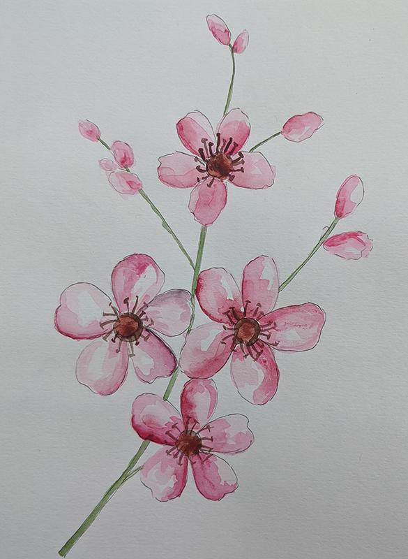 Cherry blossom sb70p67