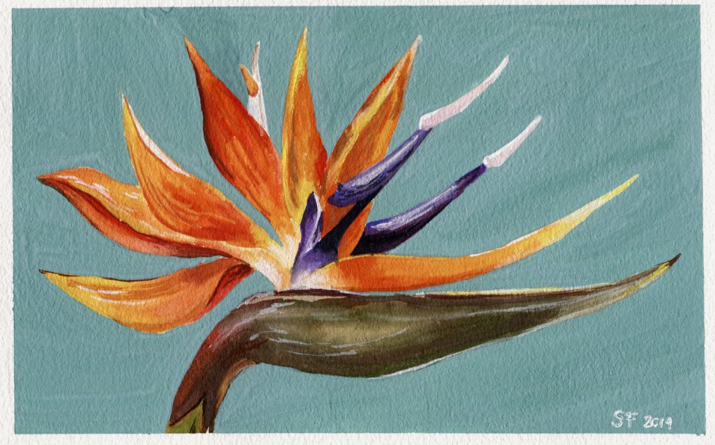 Bird Of Paradise Plant Watercolour Painting